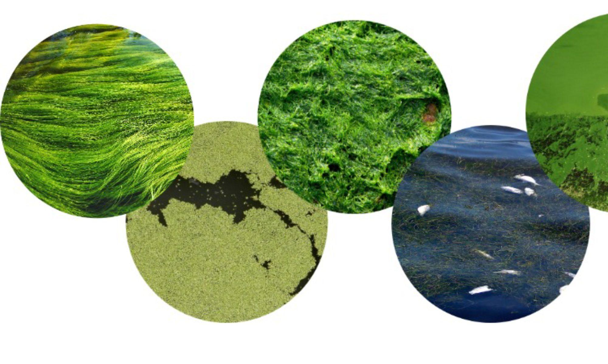 Local Algae Solutions Network